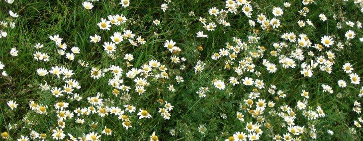 patgohn-background-flowers1.jpg