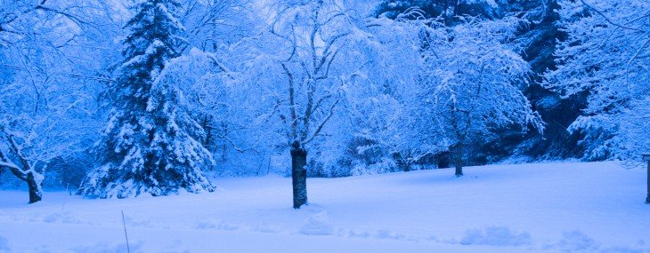 Snowy trees and shrubs in winter… life off the Back Porch