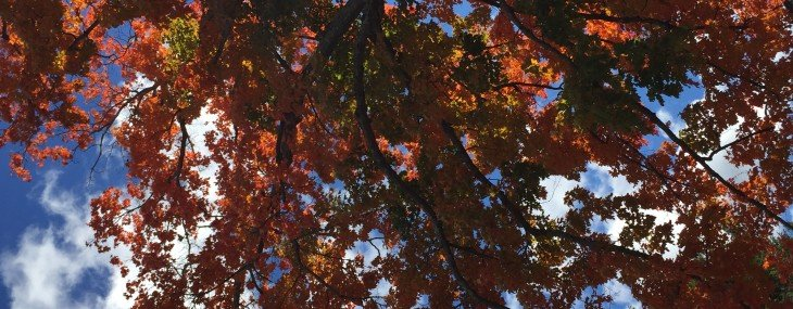 #Autumn down a country lane in New England Take Two: Sugar Maple Splendor